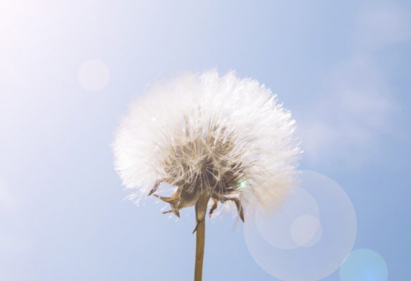 sunlight-dandelion-flower-against-blue-sky_23-2147836967